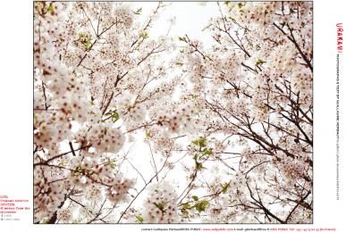 pdfX12_vol19_Urakami-5