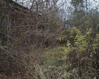 Chernobyl's Zone